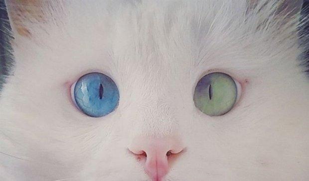 Кот с разноцветными глазами покорил сеть (фото)