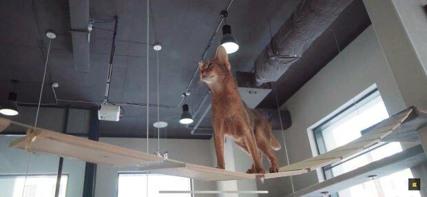 Кот, фото: скриншот из видео
