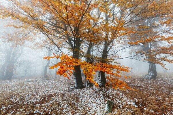 Загублені в тумані: потепління не принесе радості Івано-Франківську 15 грудня