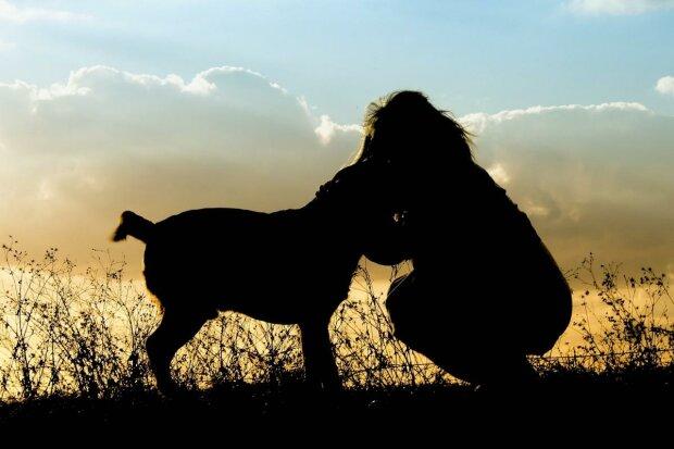 Как правильно выгуливать домашних животных в период карантина