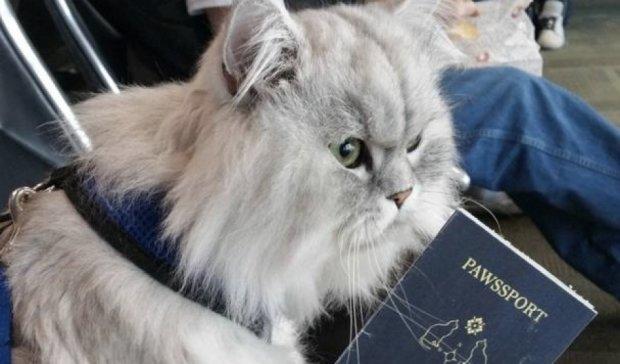 Путешествующий по США кот стал героем Instagram (фото)