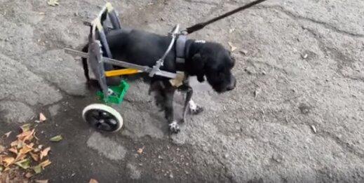 """Під Дніпром ветеринари закохалися в паралізоване цуценя і подарували йому другі """"ноги"""" - зможе бігати"""