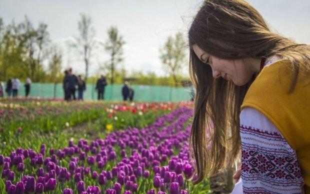 Тюльпанова долина на Буковині зачарувала українців