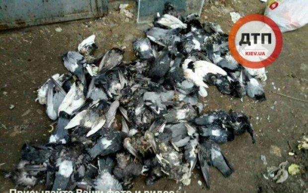 Работники ЖЭКа затоптали колонию голубей
