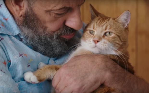 Умер легендарный кот-пианист, ставший звездой YouTube