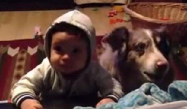 """Пес научился произносить """"мама"""" раньше ребенка (видео)"""