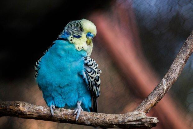 Попугай, фото иллюстративное