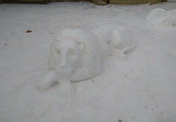 Снежные львы, фото Volodymyr Dochych