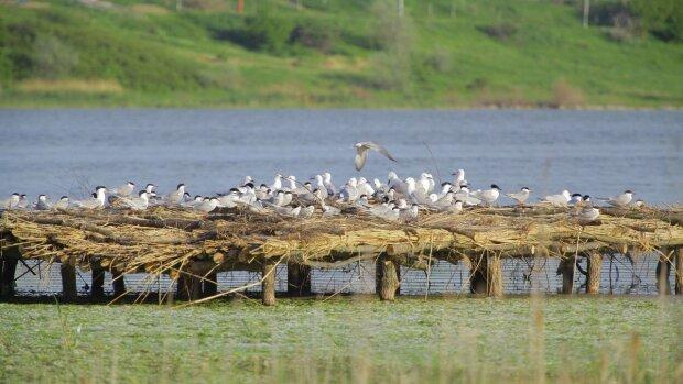 Птицы, фото: свободный источник