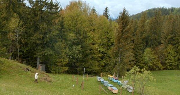 Ведмідь скоїв наліт на пасіку прикарпатця, довелося лупити струмом - забирав по одному вулику