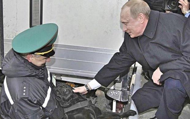 Собаки уже шарахаются: пользователи затроллили фото Путина