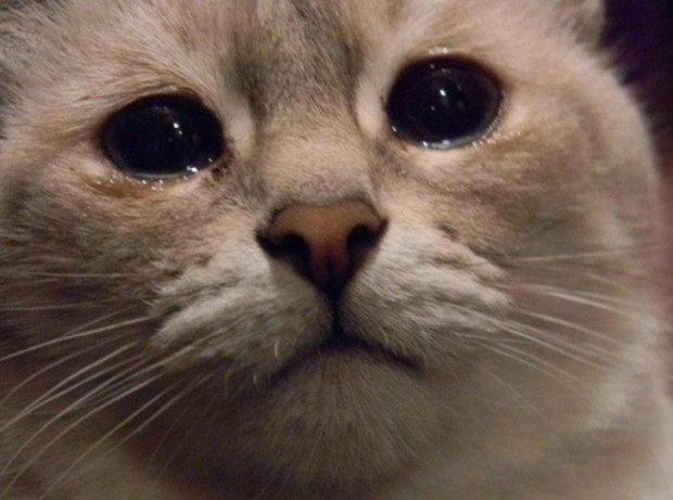 Невинный кот стал жертвой ужасного ограбления. Его защитники пытаются найти виновницу
