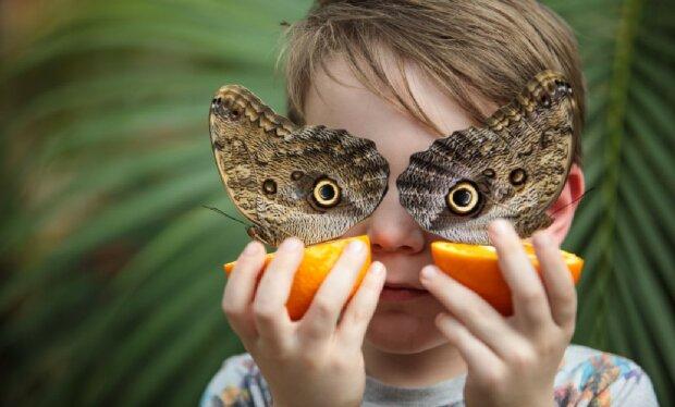 Лето на носу: педиатр Комаровский дал советы, как обезопасить детей от укусов насекомых