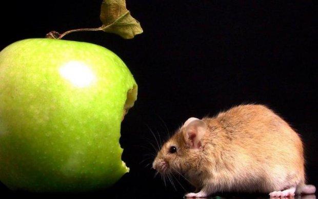 """Погризене яблуко: студентів змушують """"утриматися від інтиму до шлюбу"""" страшилками"""