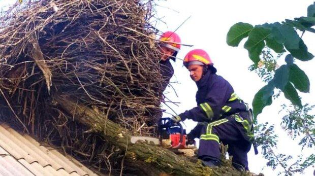 Рятувальники, фото: ДСНС