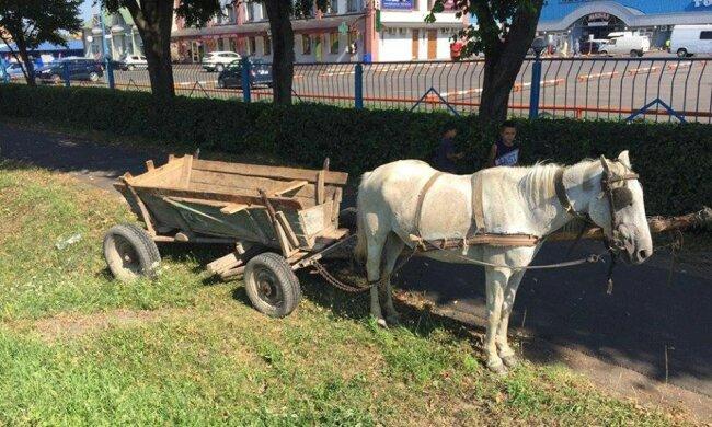"""На Закарпатті власники чотириногого транспорту """"заправляються"""" просто на газоні - """"Коні хочуть їсти!"""""""