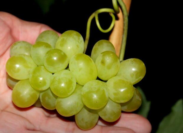 Скрин, видео YouTube виноград
