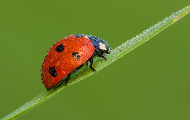 Последний век человечества: насекомые вымрут, а вслед за ними и все живое