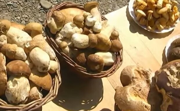 Адский потоп на Прикарпатье оставил украинцев без грибов и с дырявыми кошельками