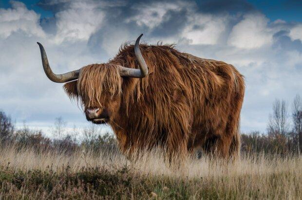 Год какого животного 2021, фото - Рexels
