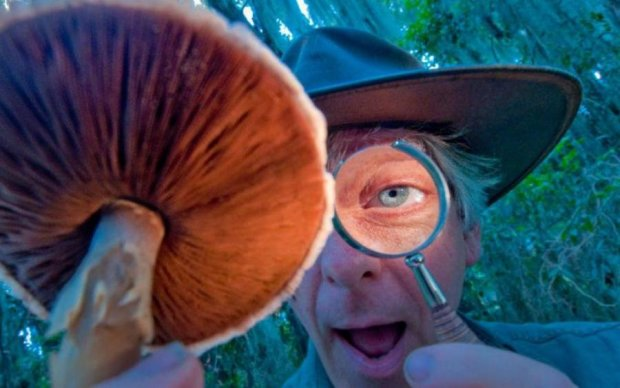 Ученые нашли еще одно применение галлюциногенным грибам