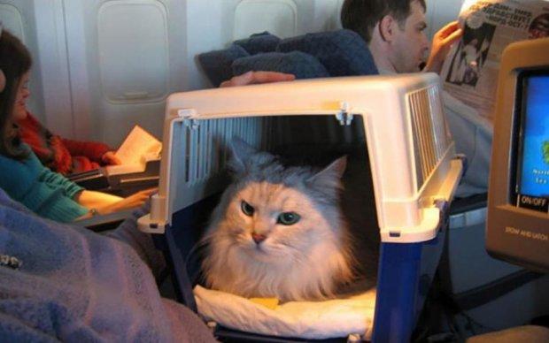Лайфхаки для мандрівників: нестандартний багаж і тварини у літаку