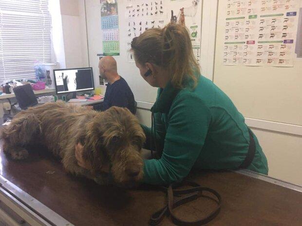 В Запорожье спасли собаку, которая стала жертвой жестокого фермера - отдал свиньям