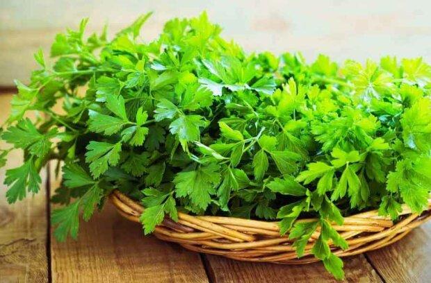 Петрушка для вічної молодості: дієтологи розповіли про незвичайні властивості рослини