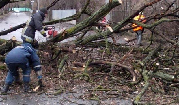 Ураган на Волині  повалив півсотні дерев і травмував сімох людей
