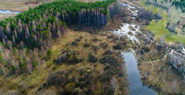 Зеленский пересчитает деревья в затопленном Прикарпатье