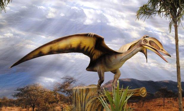 Палеонтологи нашли новый вид летающей рептилии: в числе динозавров пополнение