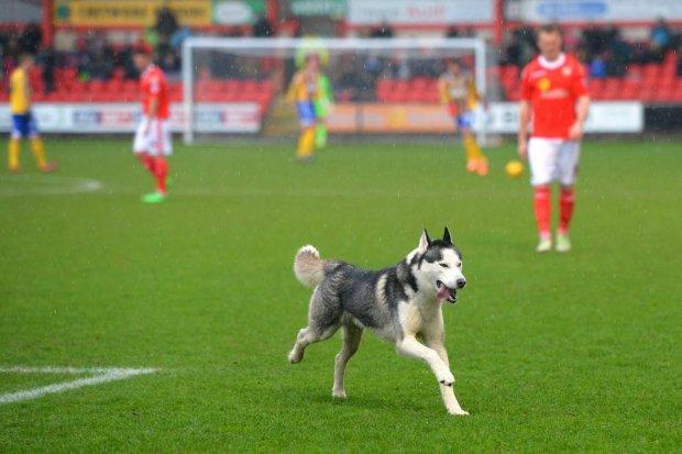 Знавіснілий пес вибіг на поле і перетворив нудний матч у видовище: відео