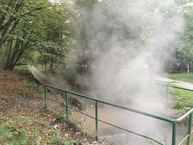 Екологія по-київськи: у Голосіївському парку в озері вариться риба