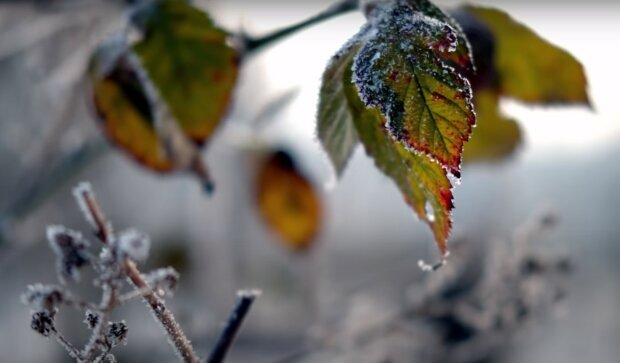 заморозки, скриншот из видео