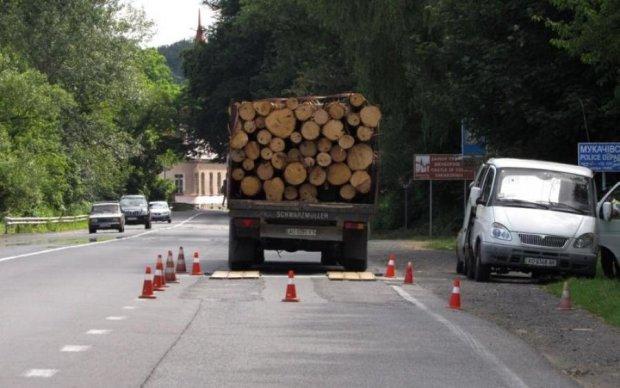 Вивезення лісу з України: з контрабандистами розмова буде коротка
