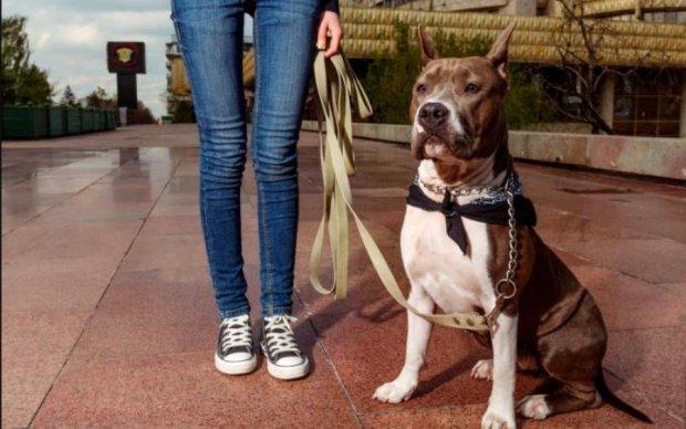 Нацькувала бійцівського собаку: жіводерці з Харкова винесли вирок