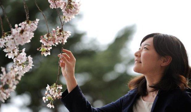 Японська сакура зацвіла завчасно (фото)