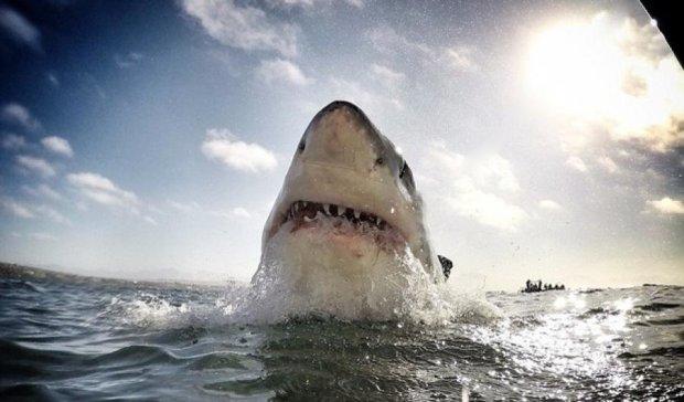 Из плавника акулы делают суп за $150