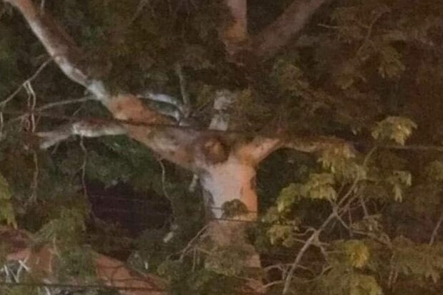 Иисус Христос на дереве в Колумбии, скриншот: Facebook