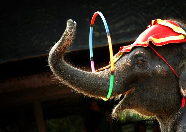 Слон сбежал из цирка и вывалялся в снегу от радости, первые кадры свободы