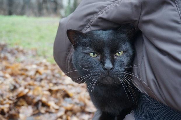 """""""Ты сделал это, Майк"""": отважный кот просто чудом пережил адский пожар, хозяин не скрывал слез"""