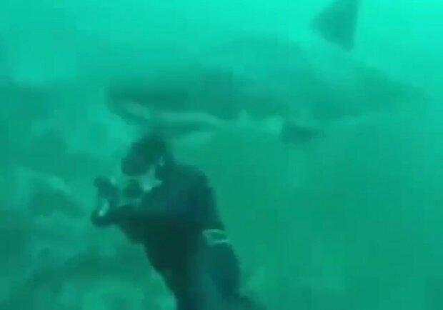 """Аквалангист едва не остался без головы из-за белой акулы: """"Подплыла и..."""""""