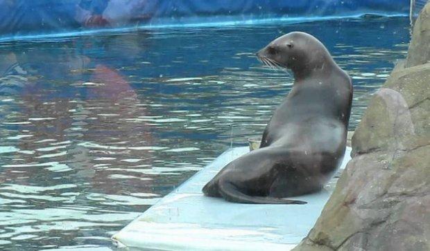 В Крыму туристы насмерть закормили тюленя