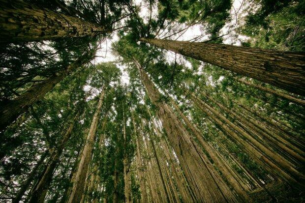 Грета Тунберг одобряет - школьник из Киева помог европейским ученым решить проблему с экологией
