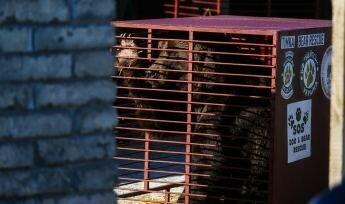Два ведмеді із Запоріжжя переїдуть до Румунії, фото: 061