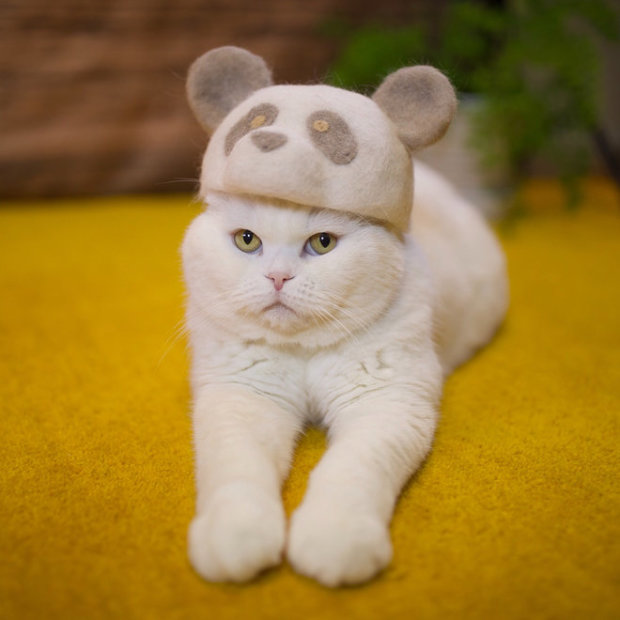 Креативный хозяин создает удивительные шапочки для котов, ни за что не догадаетесь из чего. Это гениально!
