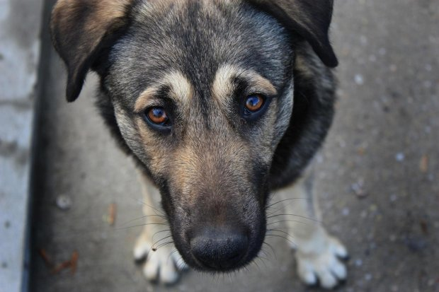 """""""Так і сказала, не прогодує"""": українці викидають домашніх тварин, бо навіть самим немає чого їсти"""