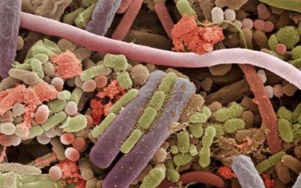 Біологи навчилися обманювати бактерії