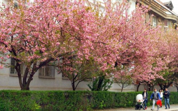 Погода на 16 квітня: весна вирішила пограти з українцями