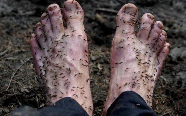 Сезон комарів: руйнуємо головні міфи про монстрів-кровопивців